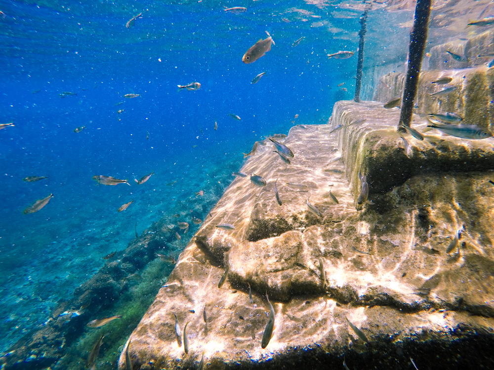 Underwater of view of fish and steps of the water at Balmorhea State Park.