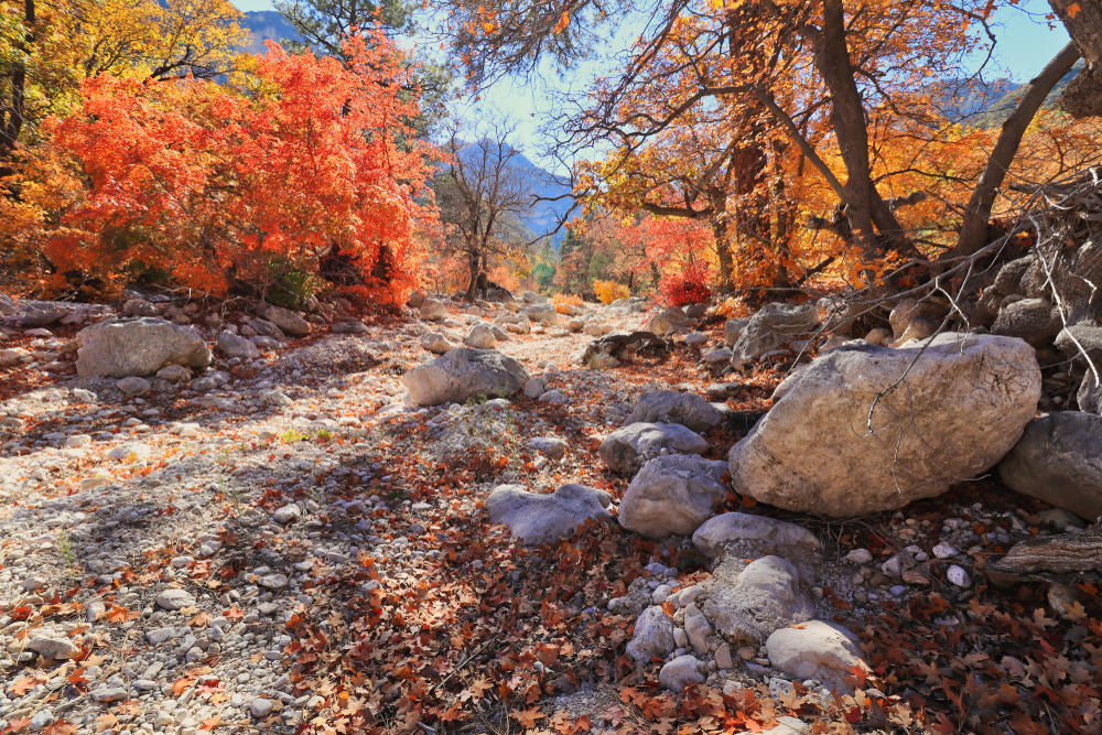 A rocky pathway at Guadalupe Mountains National Park with Fall colors