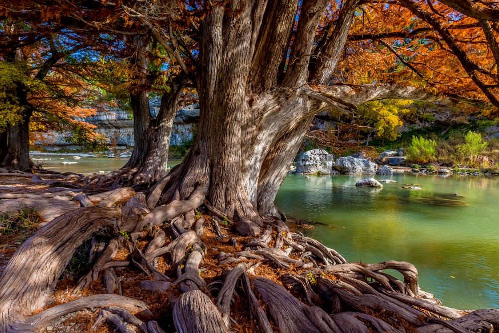 photo of trees and fall foliage at Nichol's Landing Paddle Trail
