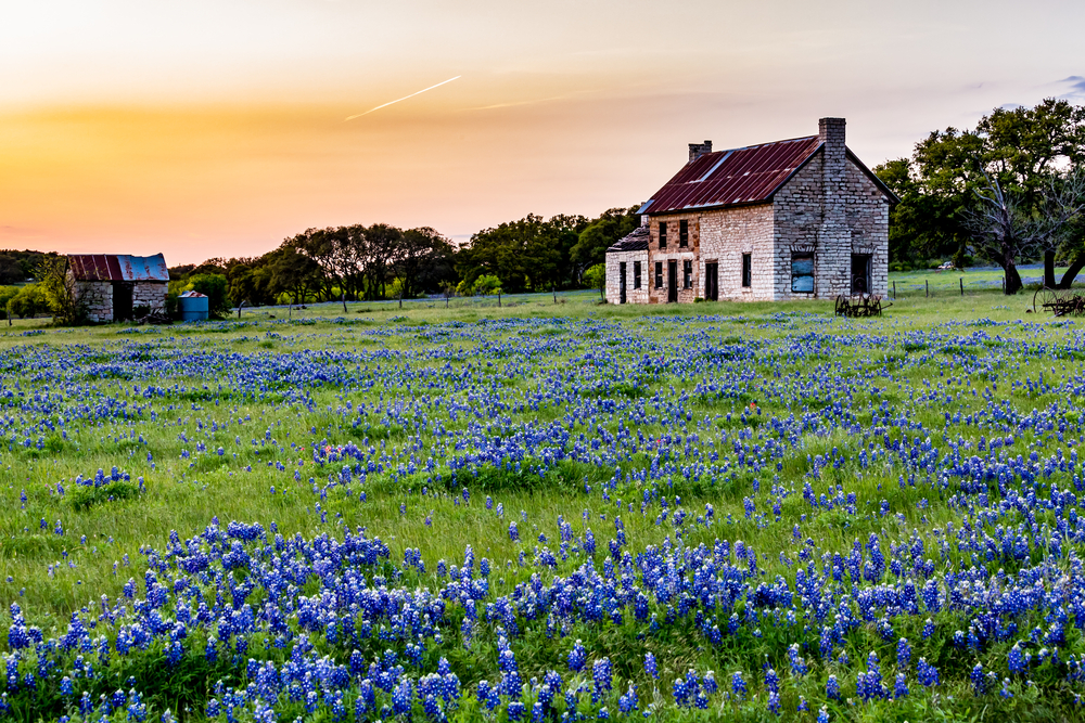 blue bonnet field with house in the background at sunset on your texas road trip