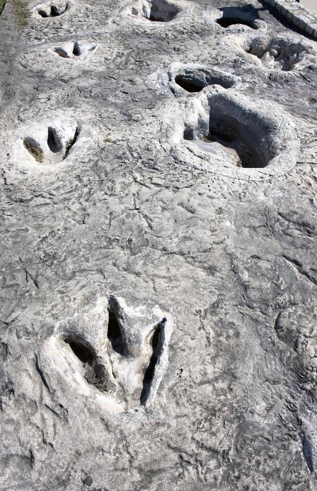 Dinosaur footprints at dinosaur valley in Texas