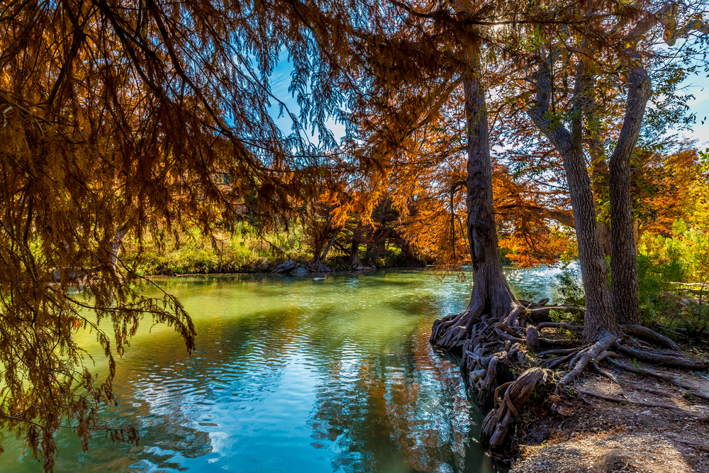 photo of trees and fall foliage at Nichol's Landing Paddle Trail on your texas road trip