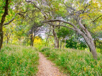 cedar hills one of the best day trips from dallas