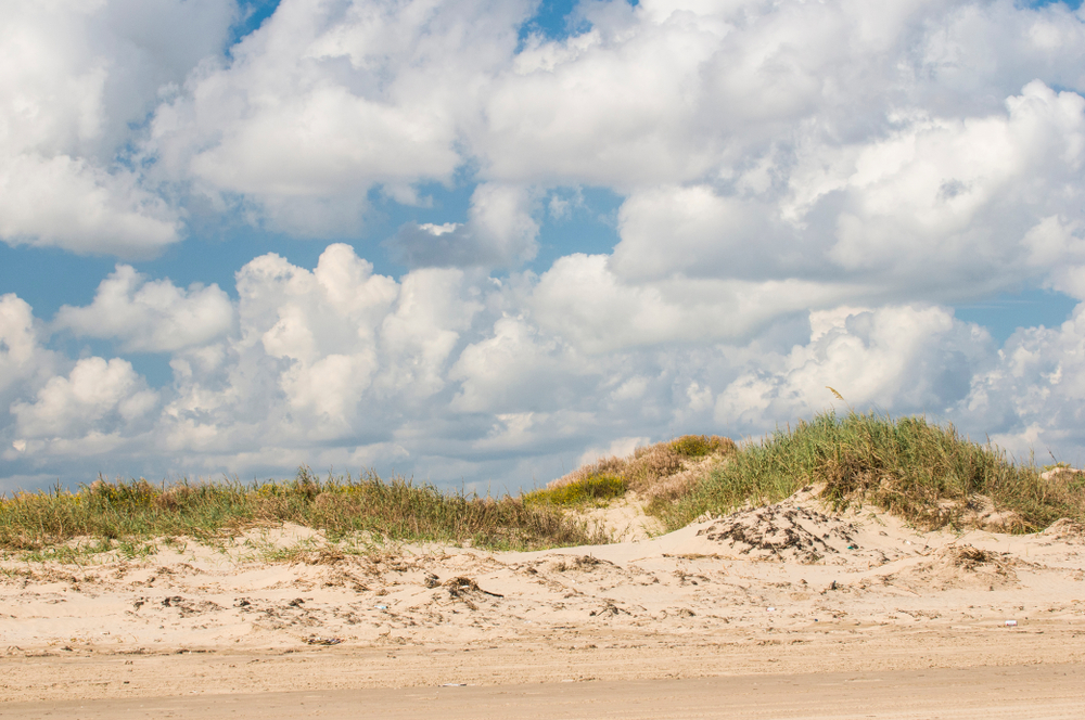 An isolated beach with small dunes with grass on
