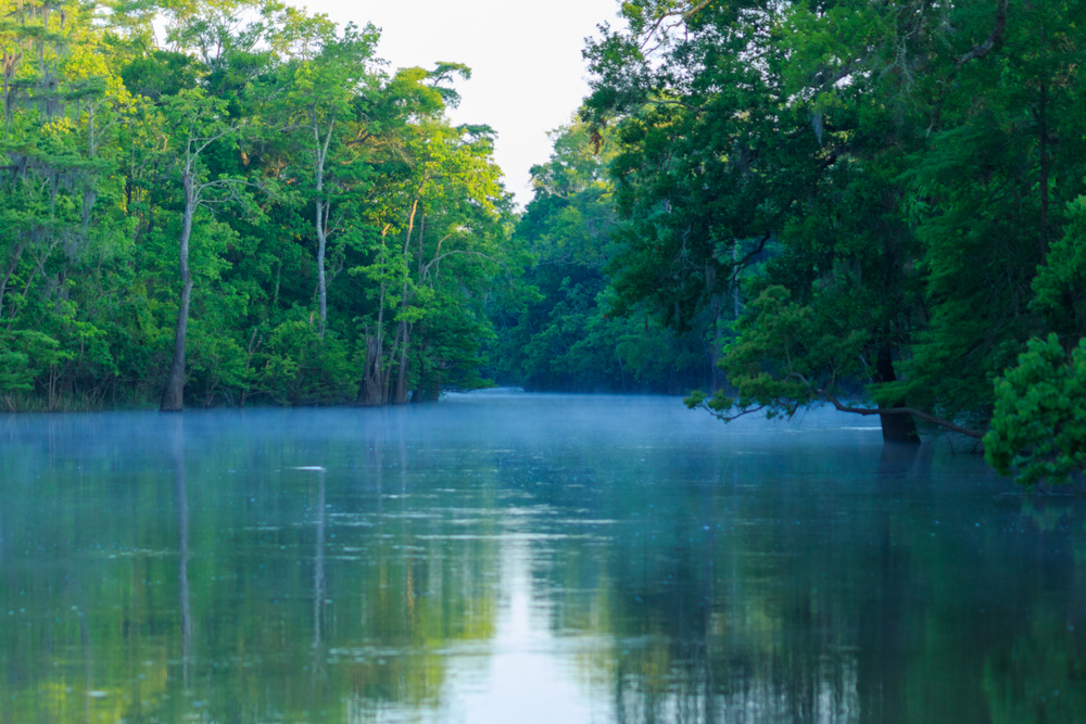 A wide river with tall trees on either side in Big Thicket Nature Preserve.