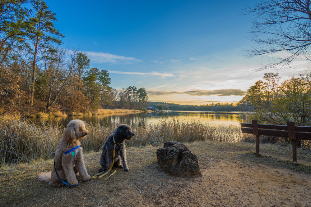 Two dogs sitting in front of a lake with trees surround it in Tyler State Park at sunset one of the best outdoor activities in East Texas.