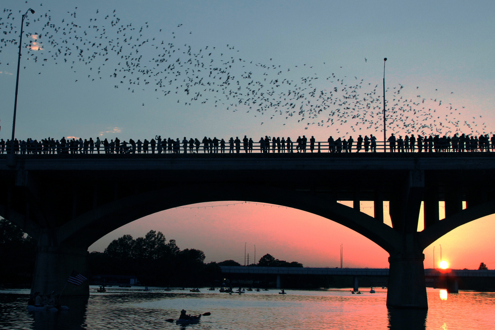 photo of people watching bats fly overhead at dusk on the congress avenue bridge