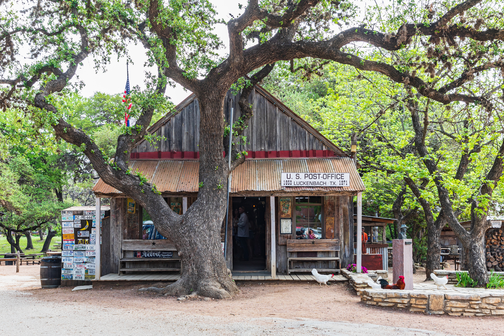 an old wood building with a large tree in front and some roosters