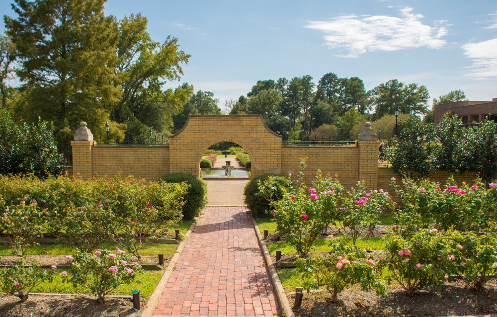 One of the rose gardens in Tyler Texas. There are rose bushes neatly in groups around a stone walkway. There is also a stone arch way that leads to more garden area and a fountain. The roses are barely blooming in pink and red. There are trees around the park.