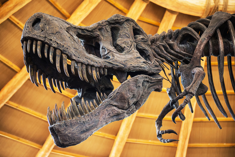 a close up of a t-rex skeleton inside of a museum