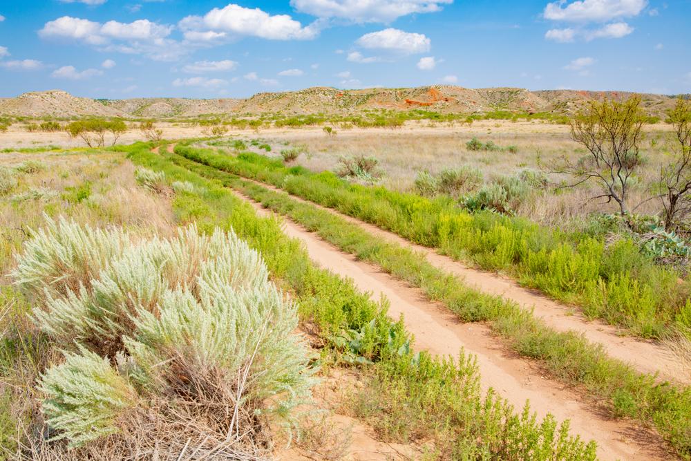 a trail through a grassy desert terrain on a bright sunny day