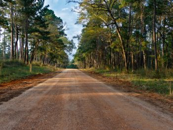 sam houston national forest one of the best things to do in conroe texas