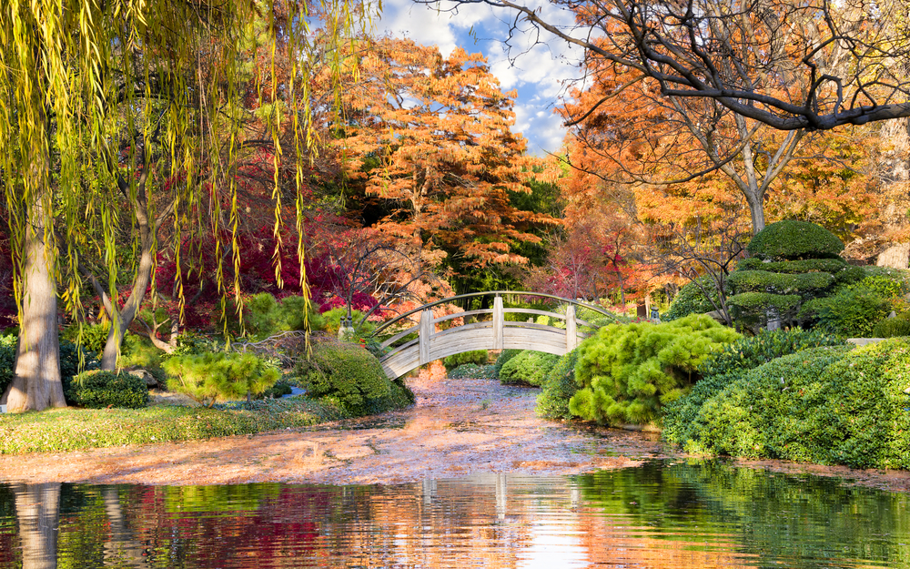 Photo of a Japanese style bridge surrounded by colorful fall foliage reflecting into the water below at the Fort Worth Botanic Gardens, one of the best things to do in Fort Worth.